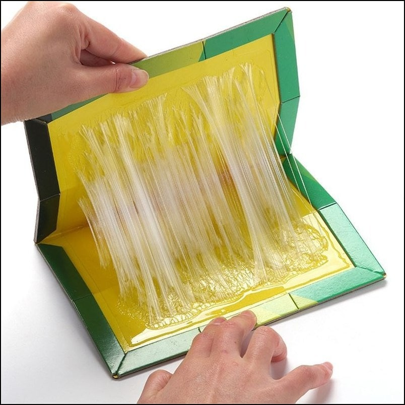 6 Pieces Mouse Sticky Trap Board